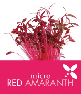 OrgAm_products_amaranth