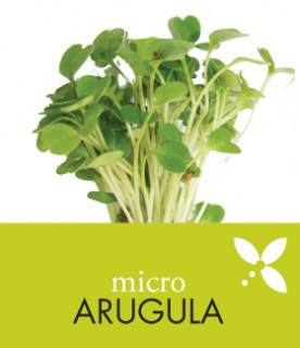 OrgAm_products_arugula
