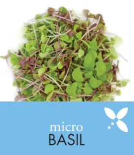 OrgAm_products_basil